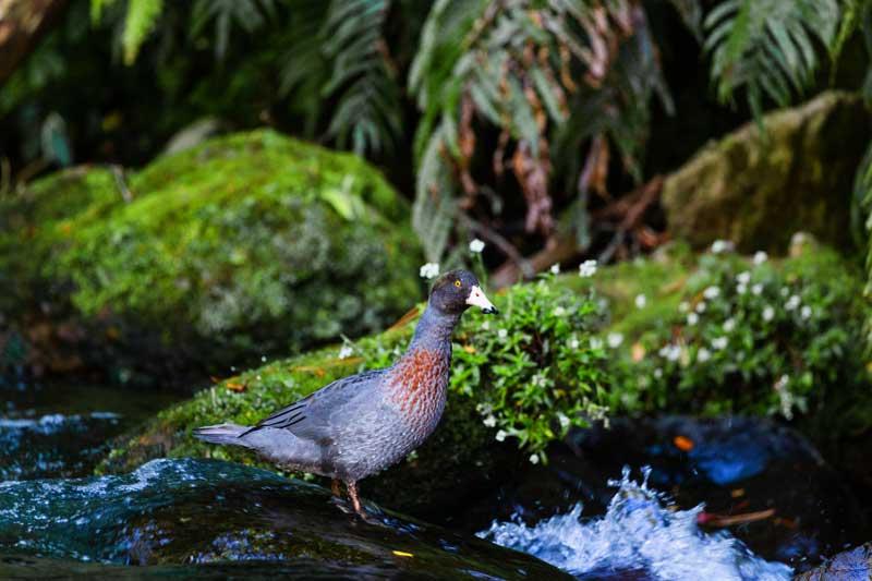 Tongariro Wilderness Lodge